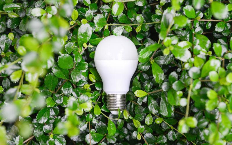 Zelené podnikání
