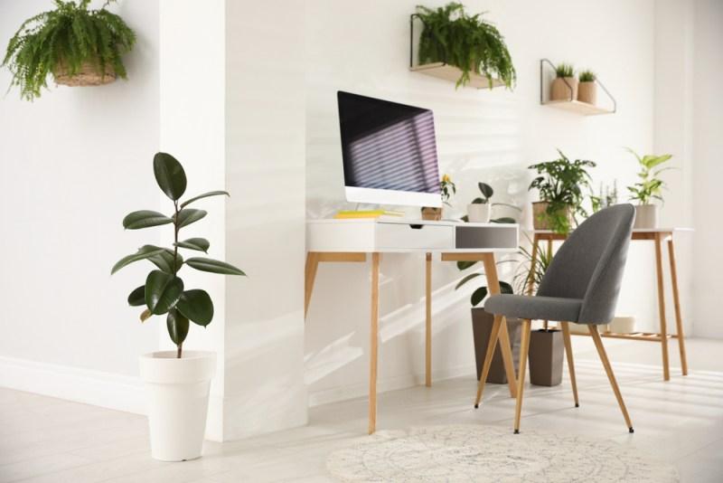 Pokojové rostliny v kanceláří